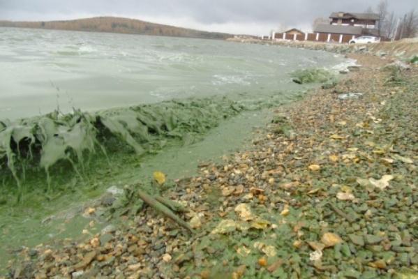 Опасные водоросли отыскали вводохранилище Нижнего Тагила, обеспечивающем город водой