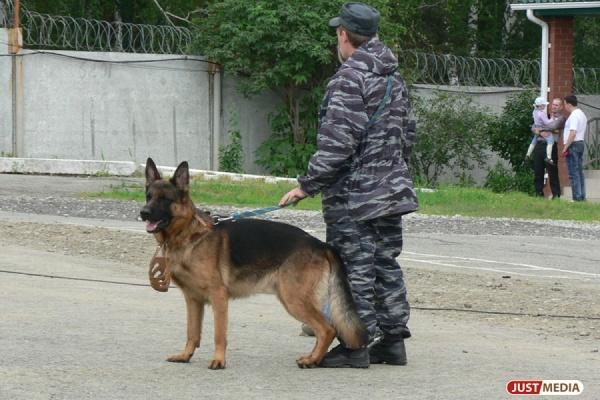 ВСвердловской области ищут пропавшего девятилетнего школьника