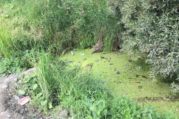 Коммунальщики сбрасывали канализационные стоки вреки Тагил иШайтанка