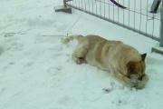 Екатеринбургские полицейские выяснят, кто причастен к смерти пса на Широкой Речке