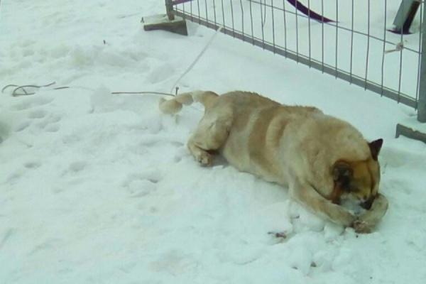 Екатеринбургские полицейские выяснят, кто причастен к убийству пса на Широкой Речке