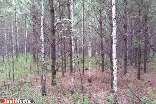 Свердловское минприроды отправит волонтеров в лес