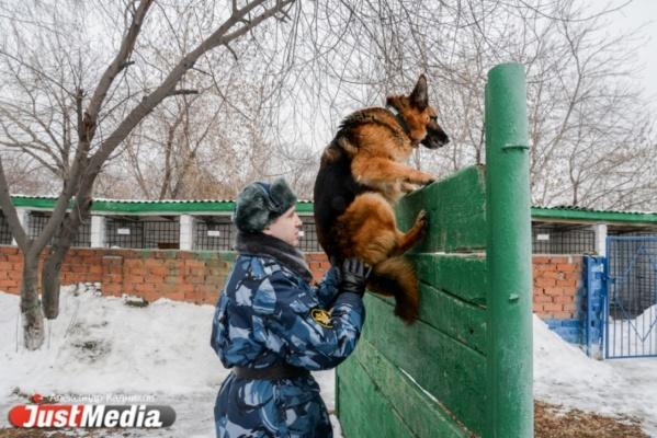 JustMedia.ru побывал в ИК-10, где увидел, как работают пушистые сотрудники ГУФСИН