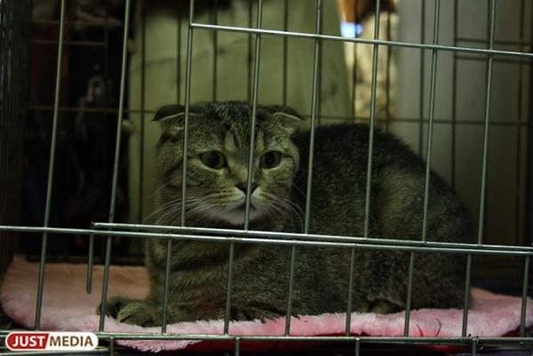 В Екатеринбурге живодер, который выбросил своего кота с балкона, отделался штрафом