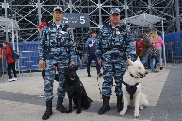 Полиция не отметила нарушений общественного порядка на матче Франция – Перу
