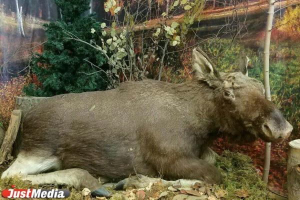 В Березовском осудили браконьера, который застрелил человека, приняв его спьяну за лося