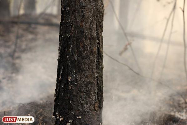 В Березовском лесничестве из-за халатности людей произошел крупный пожар