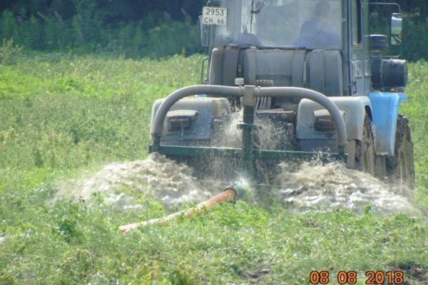 Экологи попросят Росприроднадзор разобраться со свинофермой «Хороший вкус», сливающей отходы в поля. ФОТО, ВИДЕО