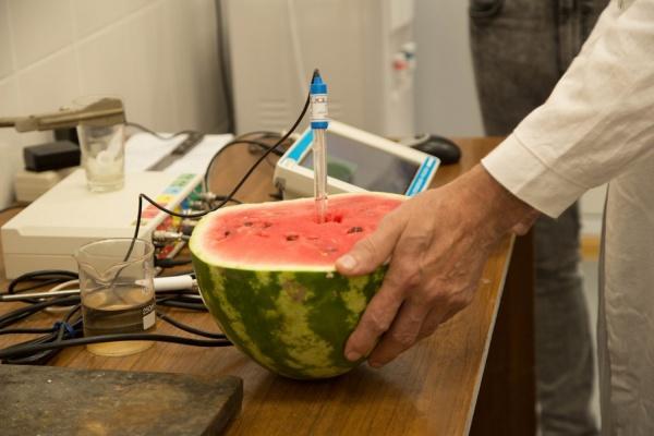 Арбузы есть еще рано. Екатеринбургские эксперты проверили полосатые ягоды на содержание нитратов и радиации