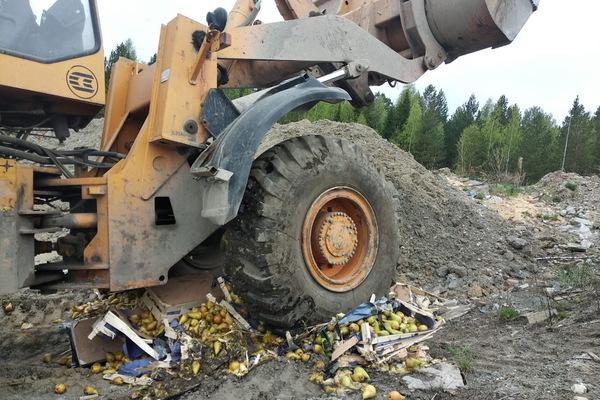 Уральские таможенники уничтожили более тонны южноазиатских груш