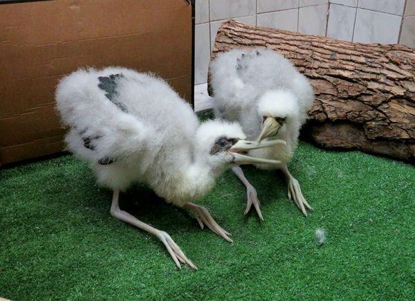 Фото с сайта московского зоопарка