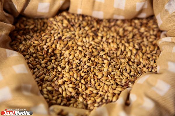 В Свердловской области урожай зерна превысил прошлогодний показатель