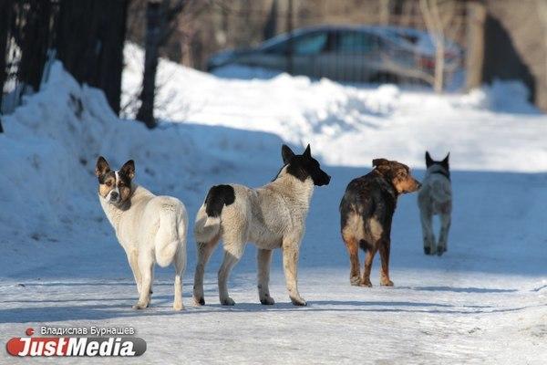 Для свердловских почтальонов закупят отпугиватели для собак