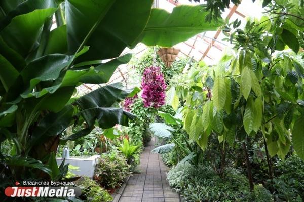 Вход в Ботанический сад Екатеринбурга станет платным