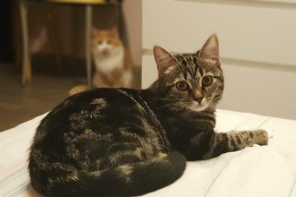 Кошка инстаграм-блогера