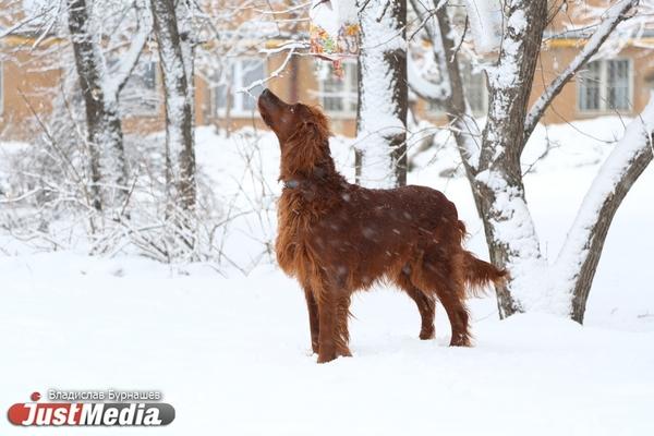 Отсутствие снега на Урале создает риск для озимых культур