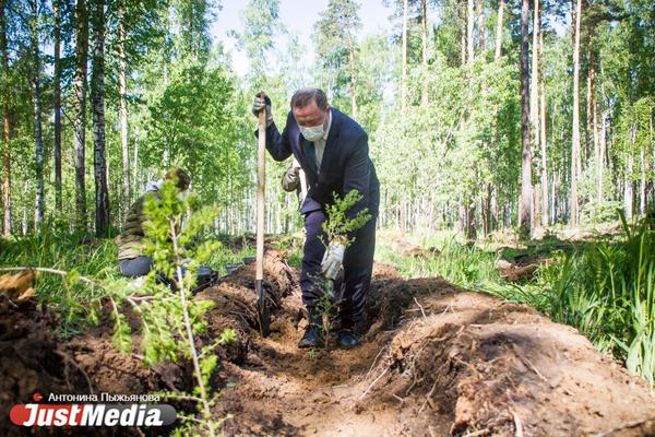 В Екатеринбурге высадили «Лес Победы» на территории, где деревья пострадали от «черных лесорубов»