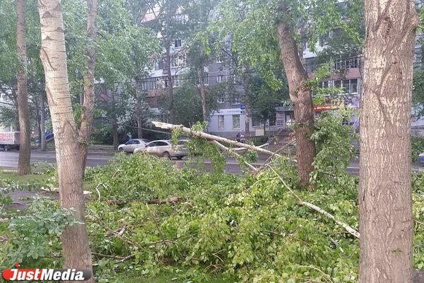 В Полевском на улице, где во время грозы ветка тополя убила пенсионерку, кронируют деревья