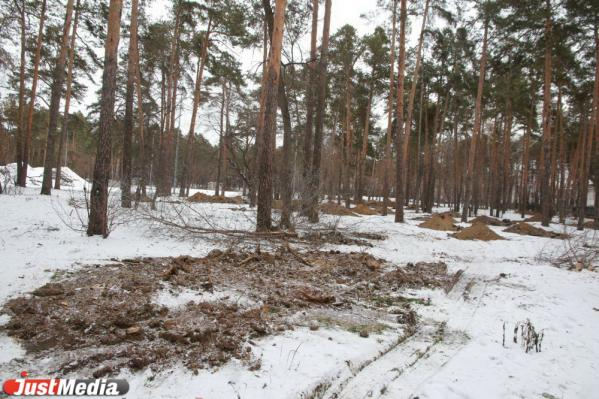 В Зеленой роще приготовили ямы для пятисот деревьев. Их высадку согласуют с урбанистами