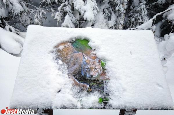 Хвойники, снег и ни души. Едем в сказочный лес Висимского заповедника