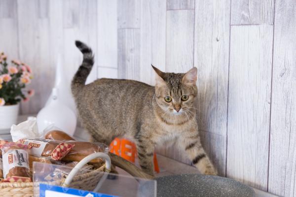 Кошка Кнопка сбежала из дома «Четвертого канала»