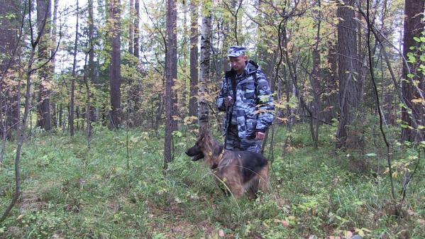 В Екатеринбурге ищут 73-летнего грибника, который заблудился в лесу