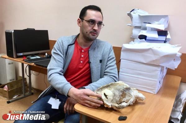Исследователи УрФУ раскрыли убийство малого пещерного медведя, свершенное 35 тысяч лет назад