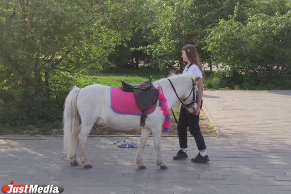 «Я маленькая лошадка, и мне живется не сладко». Парки и площади Екатеринбурга наводнили незаконные предприниматели с лошадьми