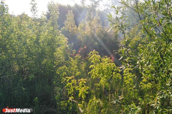 Главное о пожаре в парке Маяковского