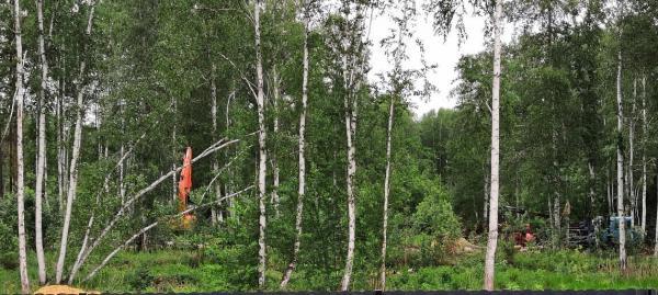 Жители элитного коттеджного поселка «Заповедник» пожаловались в прокуратуру на массовую вырубку деревьев